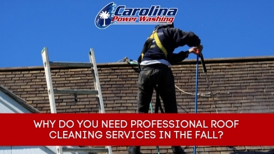 professional roof cleaning